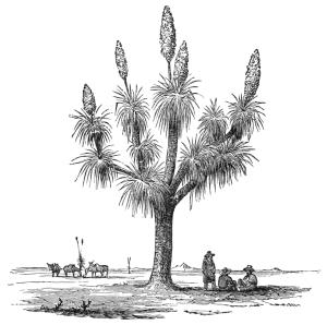 public domain, Wikimedia Commons